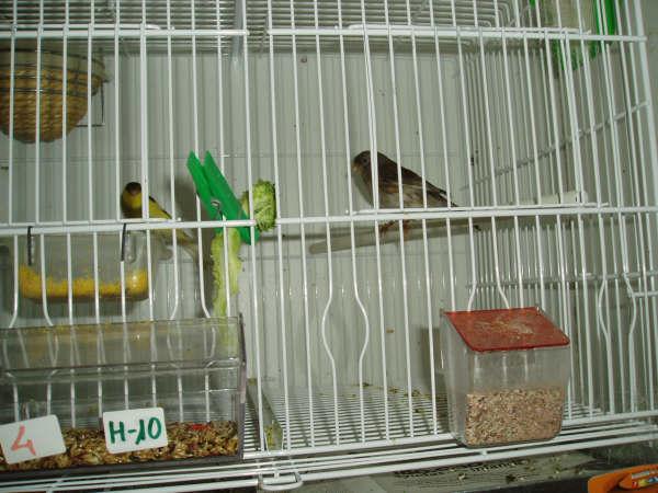 FEBRERO-2007053