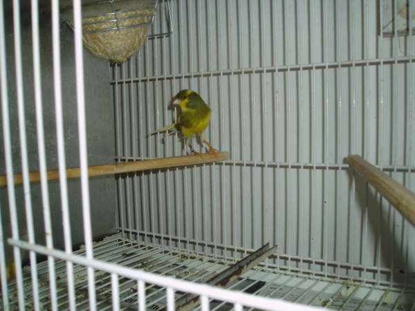 FEBRERO-2007082