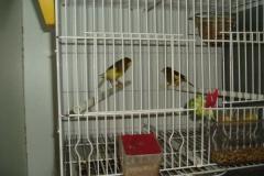 FEBRERO-2007057