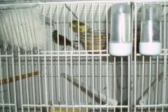 FEBRERO-2007060